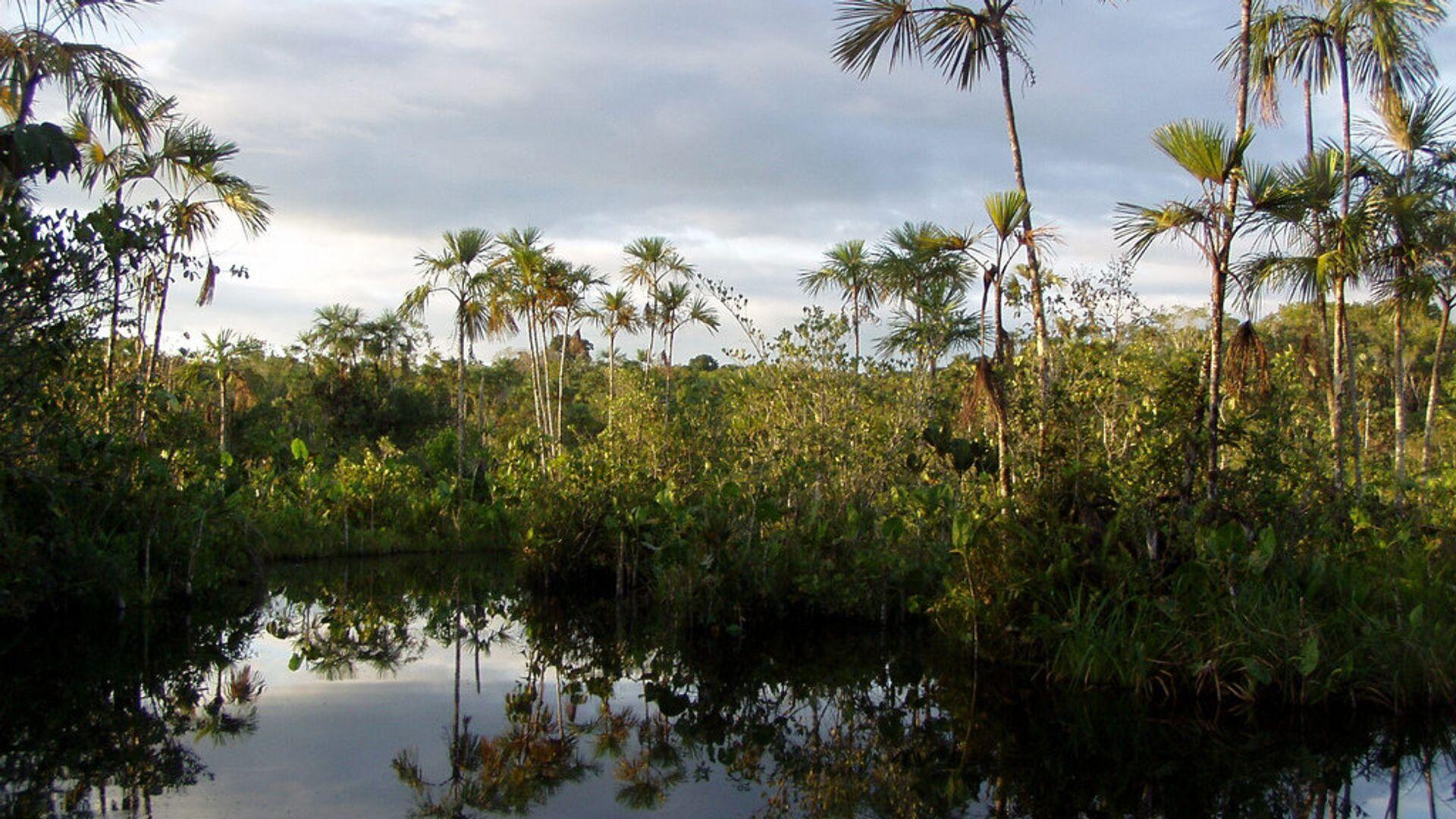 Parque Yasuní, Amazonía - Sputnik Mundo, 1920, 06.05.2021