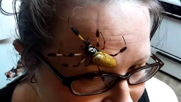 Una espeluznante araña - Sputnik Mundo