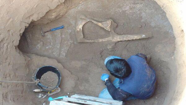 Encuentran el fósil de un Panochthus mientras cavaban un pozo en el terreno de una casa en Argentina - Sputnik Mundo