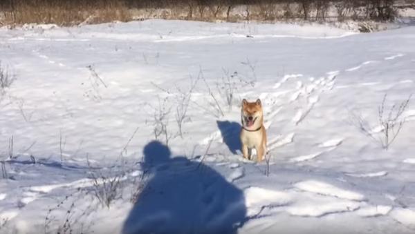 El perro Stiv, rumbo a la fama panrusa por su 'fiasco' - Sputnik Mundo