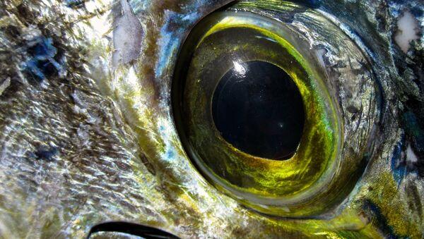 El ojo de un pez - Sputnik Mundo
