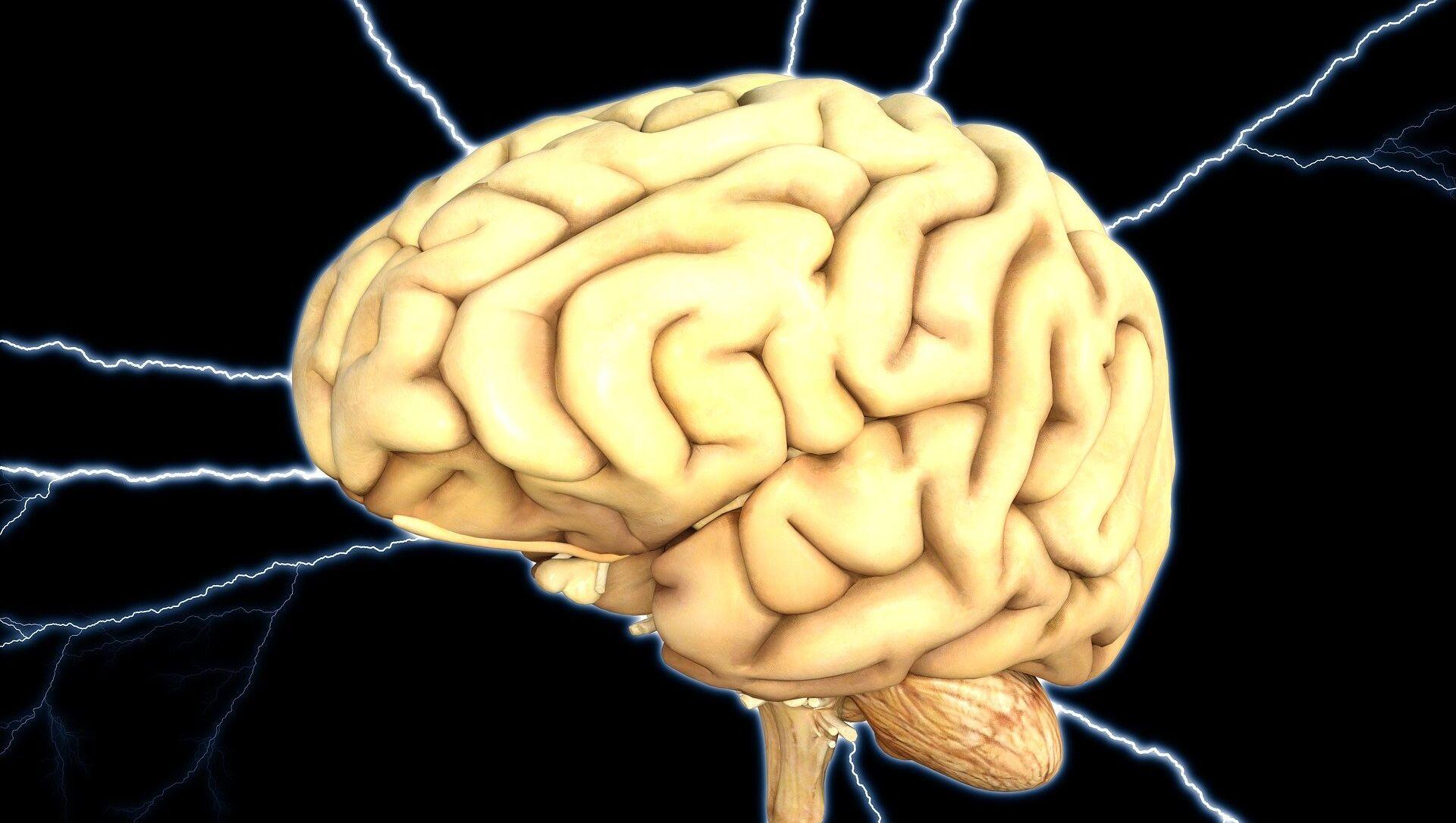 Cerebro (ilustración) - Sputnik Mundo, 1920, 30.04.2020
