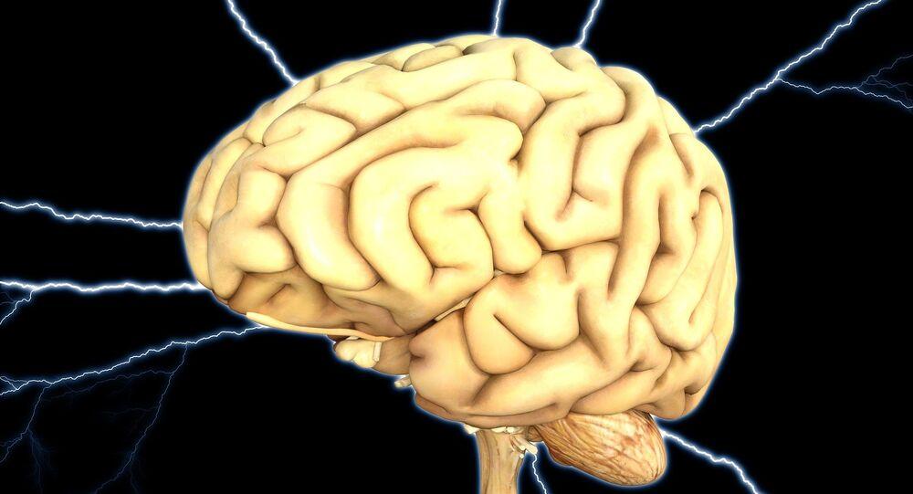 Cerebro (ilustración)