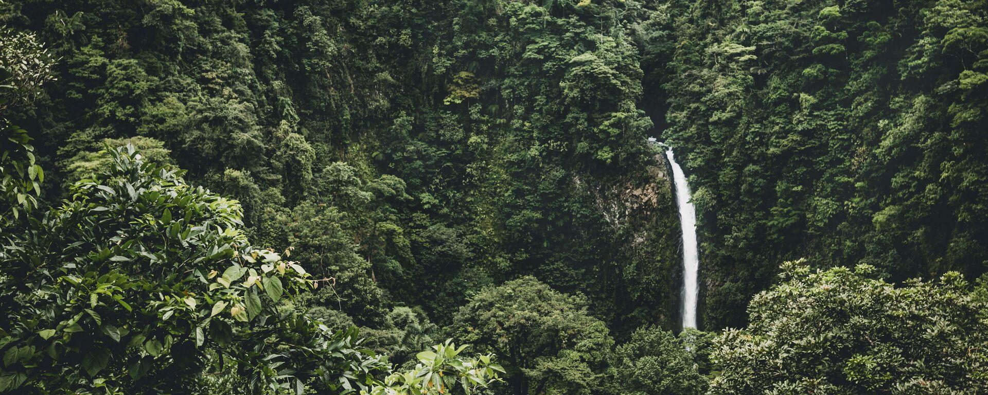 Amazonia (imagen referencial) - Sputnik Mundo, 1920, 03.05.2021