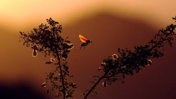 Un insecto (imagen referencial) - Sputnik Mundo
