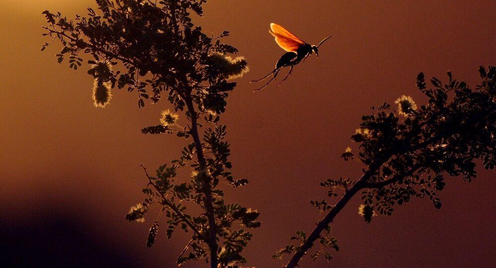 Un insecto (imagen referencial)