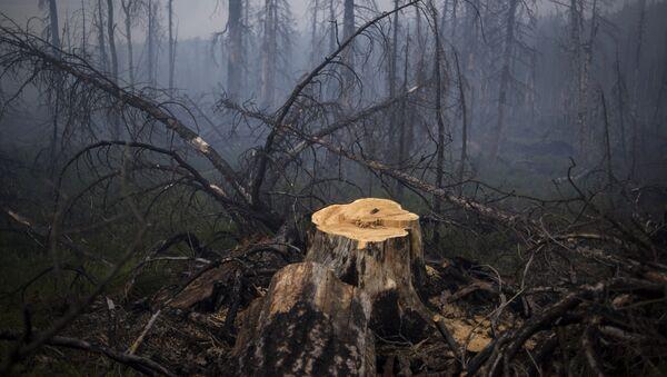 Incendios forestales (archivo) - Sputnik Mundo