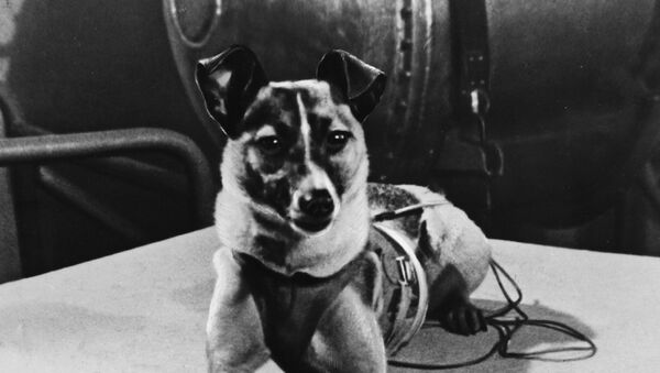 Laika, perra cosmonauta - Sputnik Mundo