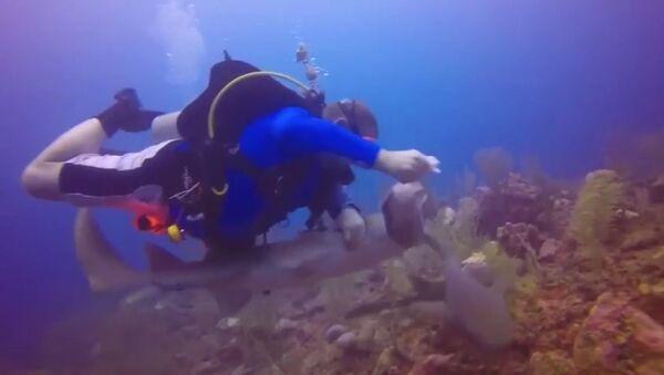 Pelea submarina: un buzo lucha contra un tiburón por un pez - Sputnik Mundo