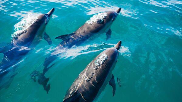 Los delfines (archivo) - Sputnik Mundo