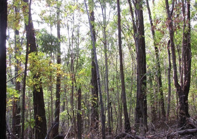 Un bosque con fresnos
