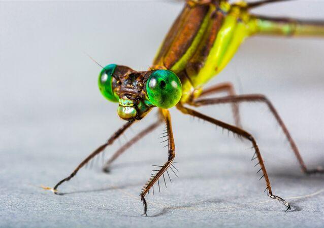Una libélula