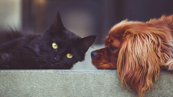 Un gato y un perro (imagen referencial) - Sputnik Mundo