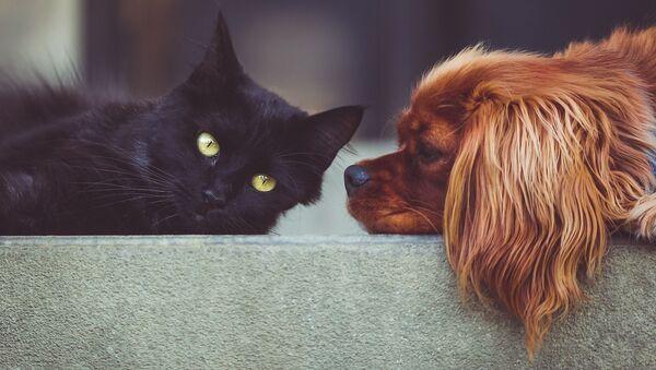 Un gato y un perro - Sputnik Mundo