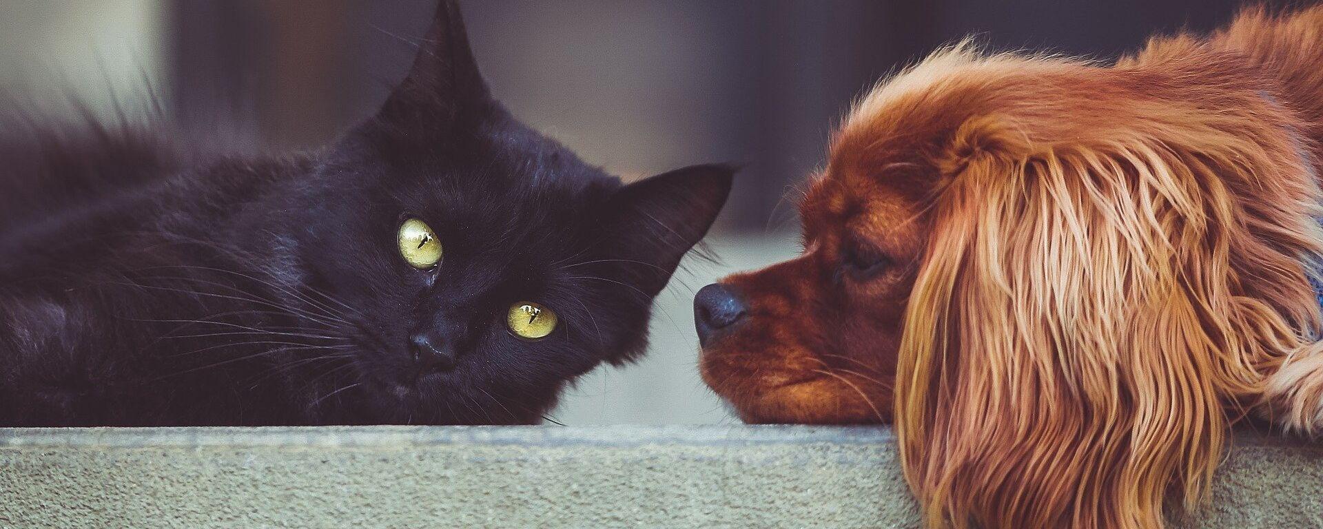 Un gato y un perro - Sputnik Mundo, 1920, 31.12.2020
