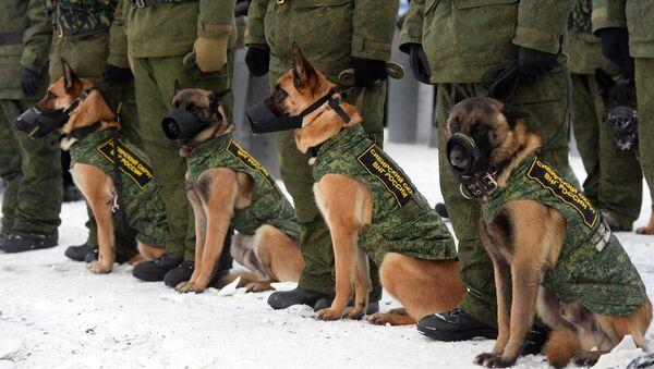 Perros de la Policía rusa (Archivo) - Sputnik Mundo