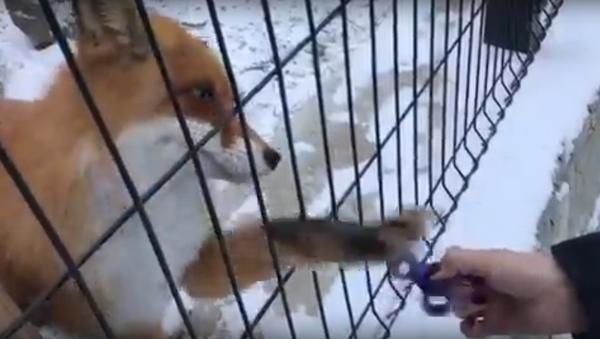 El vicio del 'spinner' llega al mundo animal - Sputnik Mundo
