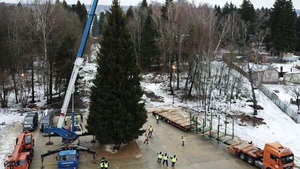 Eligen el árbol de Navidad más importante de Rusia - Sputnik Mundo