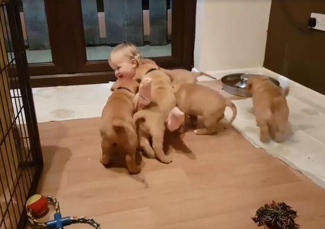 Los cachorros 'atacan' a niña pequeña