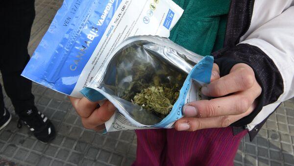 Una variedad del cannabis legal en Uruguay - Sputnik Mundo