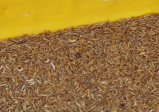 Larvas (imagen referencial)
