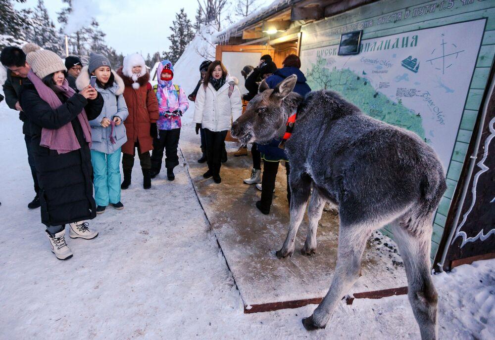 Los saami de Rusia: la vida de un pueblo único a través de las imágenes