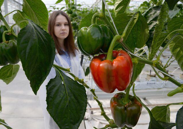 Un complejo de invernaderos en Rusia (imagen referencial)