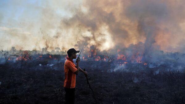 Consecuencias de incendios forestales en Indonesia - Sputnik Mundo