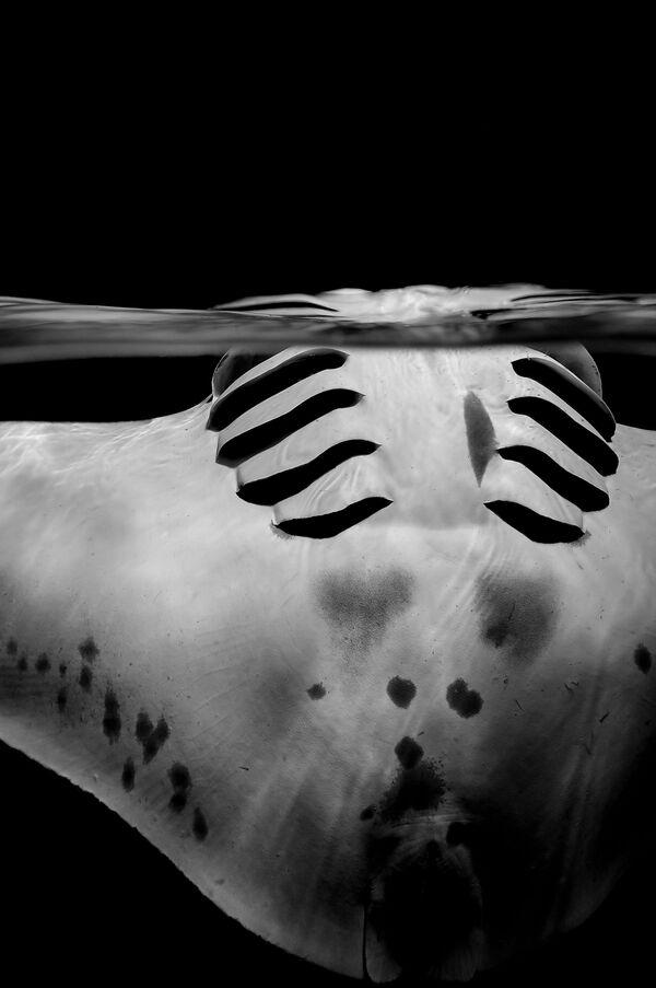 El mundo misterioso de las aguas profundas - Sputnik Mundo