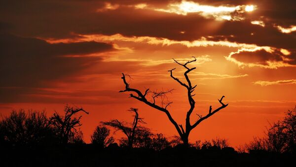 Amanecer en África - Sputnik Mundo