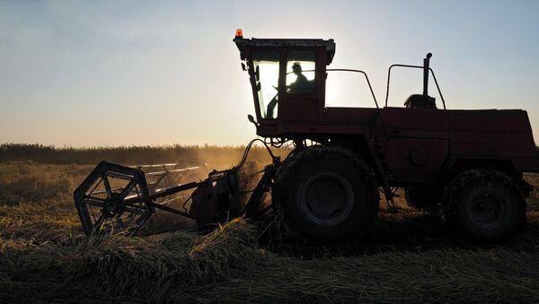 Cosecha de arroz en Rusia - Sputnik Mundo