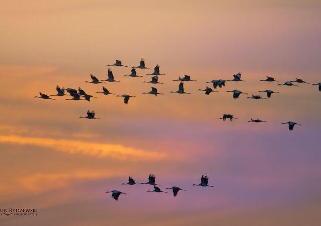 Las aves (imagen referencial)