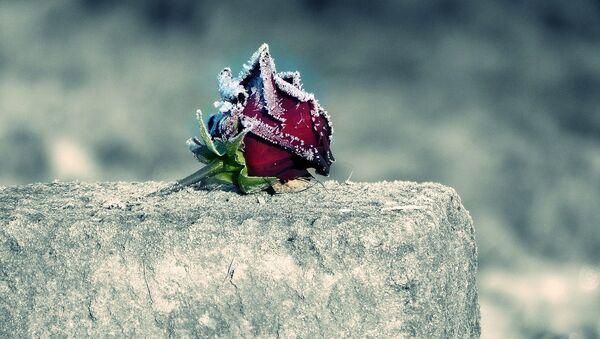 Una flor en una tumba - Sputnik Mundo