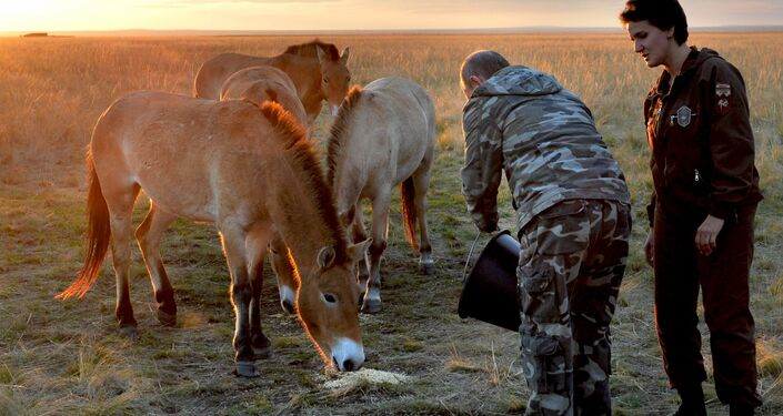 Vladímir Putin, dando de comer al caballo de Przewalski