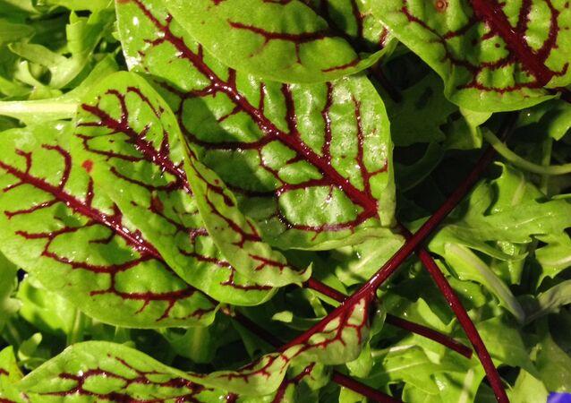 Una planta (imagen referencial)