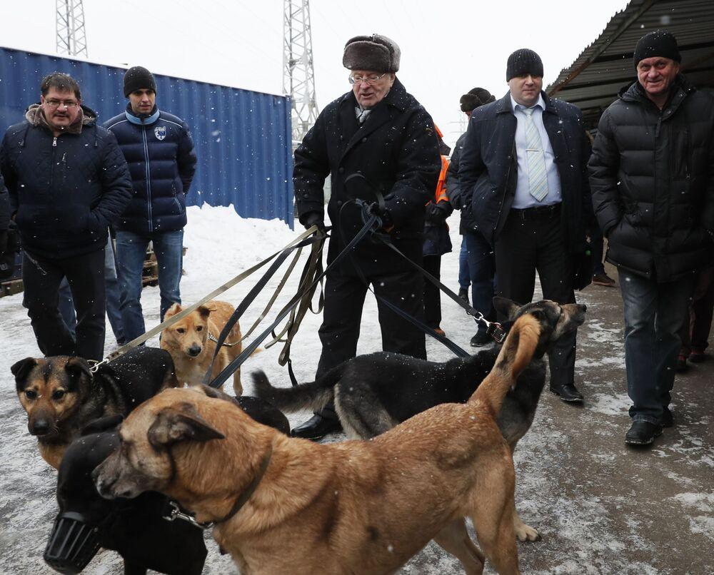 El líder del Partido Liberal Demócrata de Rusia, Vladímir Zhirinovski (centro), visita el refugio para perros callejeros Krasnaya Sosna, en Moscú