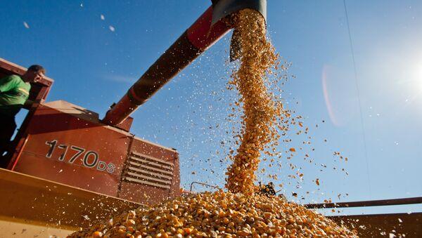 Producción agraria en Brasil - Sputnik Mundo