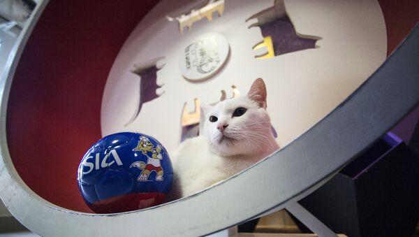 El gato Aquiles - Sputnik Mundo