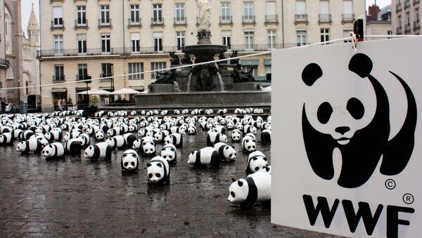 Logo de WWF - Sputnik Mundo