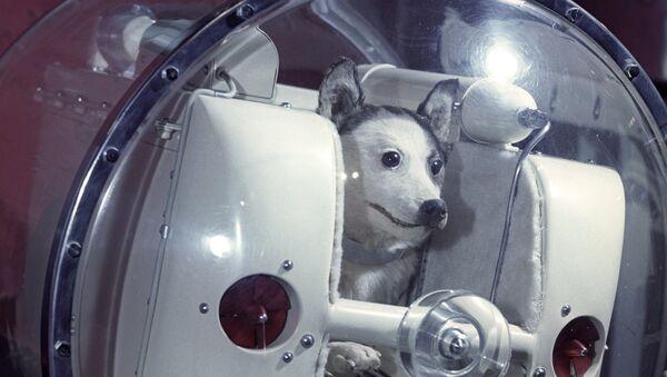 Laika, perra cosmonauta, imagen referencial - Sputnik Mundo