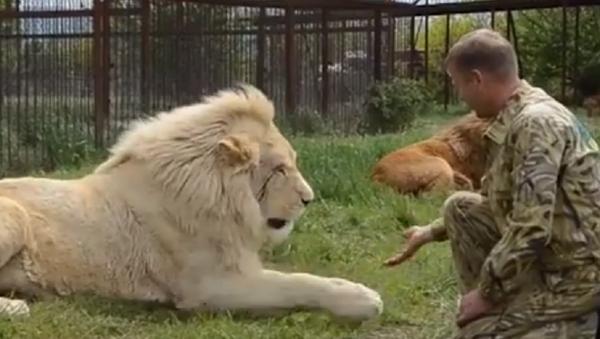 Besos y masajes: la vida de un verdadero encantador de leones de Crimea - Sputnik Mundo