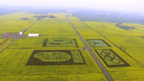 Enormes dibujos surgen en plantaciones de canola en China - Sputnik Mundo