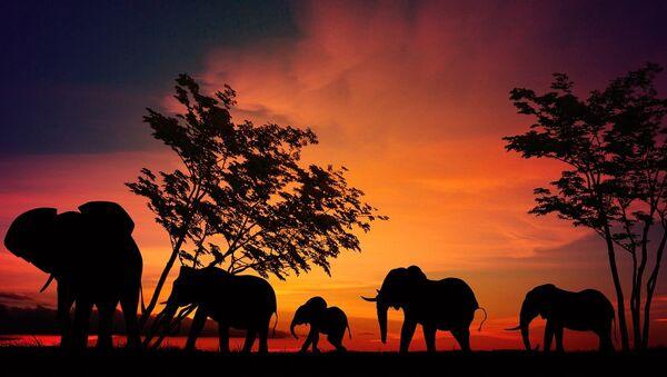 Elefantes - Sputnik Mundo