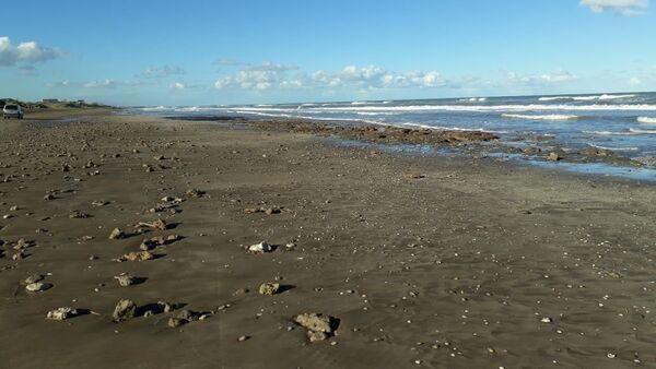 Playa argentina donde sucedió el hallazgo de un gliptodonte juvenil - Sputnik Mundo