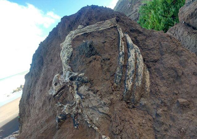 Costillar de un perezoso terrestre gigante con más de tres millones de años.