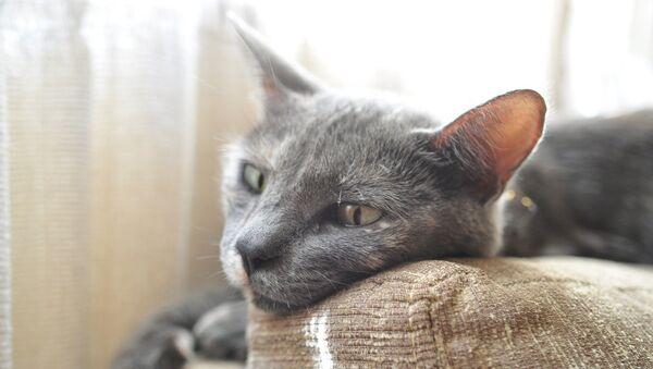 Un gato triste - Sputnik Mundo