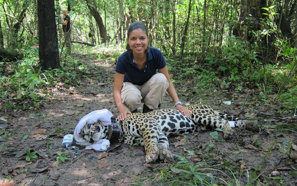 El jaguar, uno de los felinos más bellos y temidos de América - Sputnik Mundo