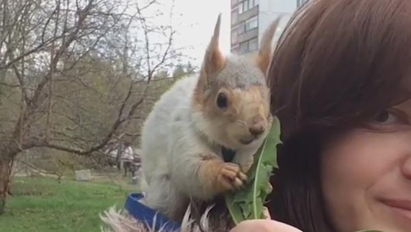 La vida de la tierna ardilla que encontró una nueva familia en Novosibirsk - Sputnik Mundo