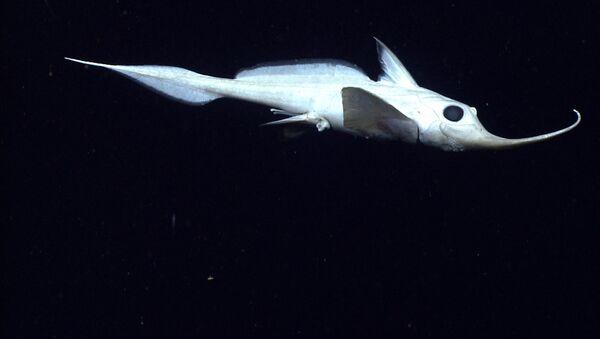 Un pez abisal - Sputnik Mundo