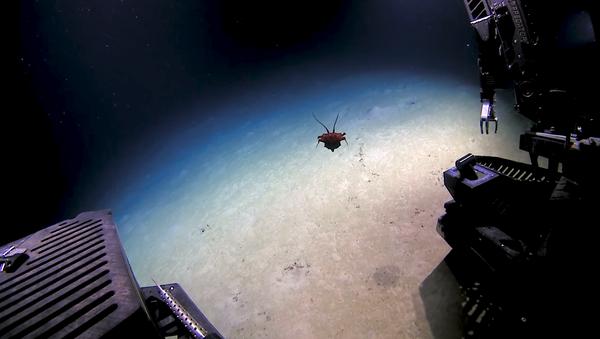 Una extraña criatura avistada en el golfo de México sorprende a los científicos - Sputnik Mundo